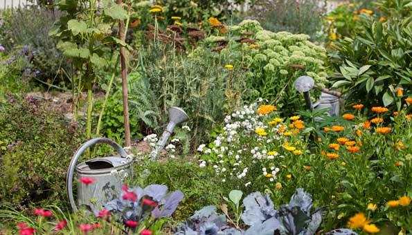 Garten mit Blumen und Gemüse