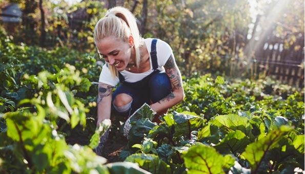 Gärtnern im klimafesten Garten