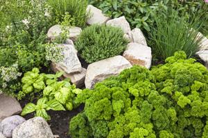 Einen Kräutergarten anlegen: So geht es richtig
