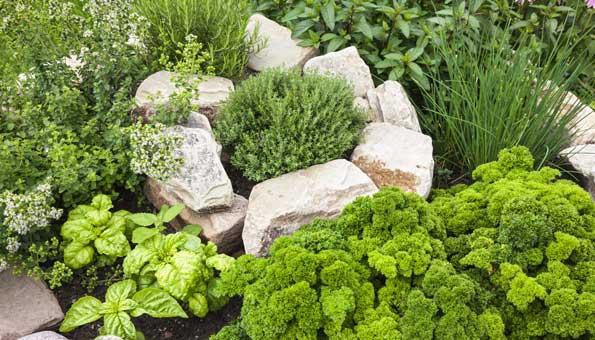 Wenn Kräuter im Garten oder auf dem Balkon richtig angepflanzt und gepflegt werden, ist die Ernte später eine besondere Freude.