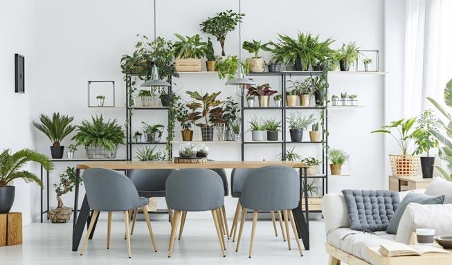Welche 10 Pflanzen die Luft besonders gut reinigen