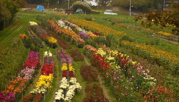 Blumen selber pflücken in der Schweiz Mathis Hof Bottmingen