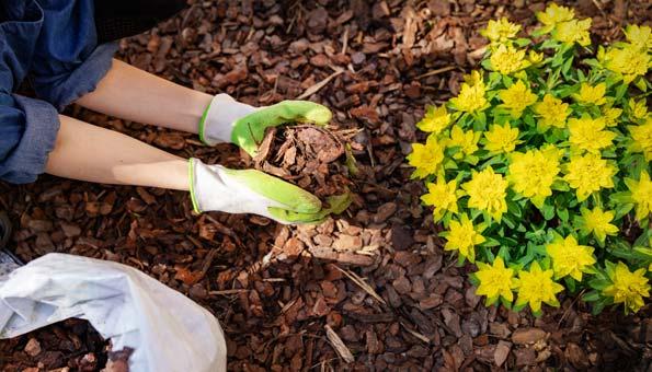 Mulchen im Garten und Pflanzen schützen und nähren