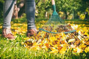 Mit Laub den Boden Mulchen im Garten und Gemüsebeet