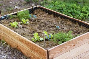 Stroh zum Mulchen des Bodens und der Beete