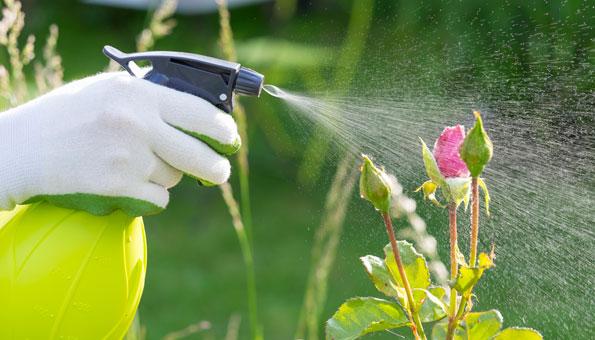 Neemöl eignet sich zur Schädlingsbekämpfung