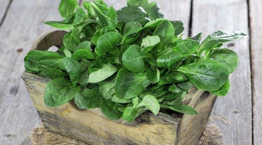 n sslisalat s en wie man den feinen salat anpflanzt. Black Bedroom Furniture Sets. Home Design Ideas