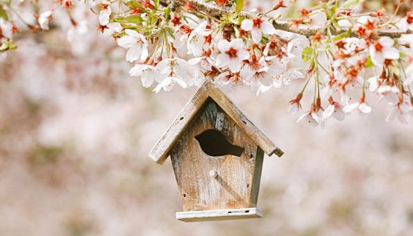 Ein Vogelhaus hilft, Nützlinge wie Amseln oder Maisen anzusiedeln.