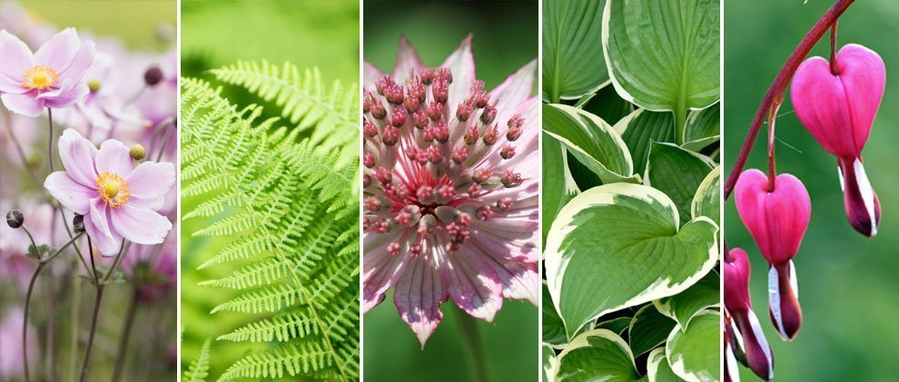 Schattenpflanzen: Was wächst im Schatten und Halbschatten?