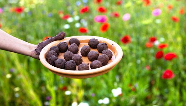 Seedballs kaufen und wie Samenbomben selber machen