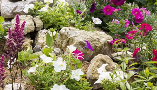 Steingarten anlegen: Anleitung und Tipps für die richtigen Steine und Pflanzen im Steingarten