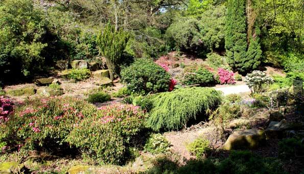 Diese Pflanzen eignen sich für den Steingarten