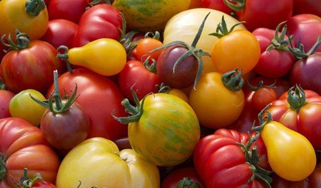 Warum die feinsten Tomaten vom eigenen Balkon kommen