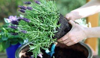Warum Sie nur noch Blumenerde ohne Torf kaufen sollten