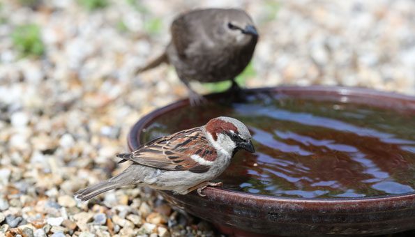Vogeltränke und Vogelbad selber machen