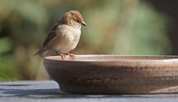 Die Vogeltränke auf einen Tisch oder Baumstumpf stellen.