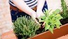 Im kleinen Garten mehr ernten: 6 einfache Tipps