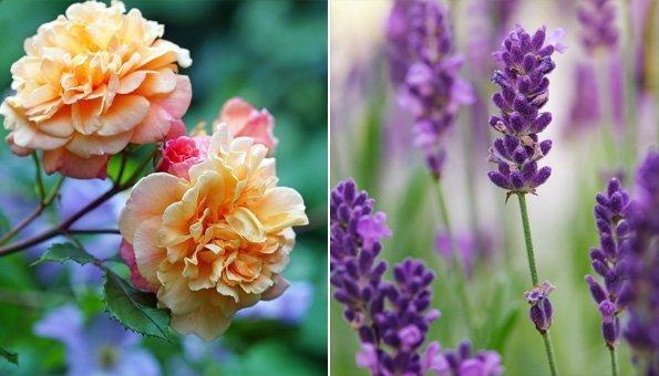 Wie Sie mit Mischkultur im Garten mehr Erfolg haben