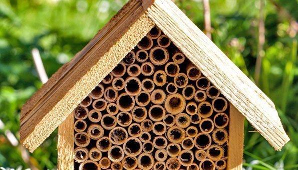 Wie Sie Nützlinge im Garten und auf dem Balkon ansiedeln