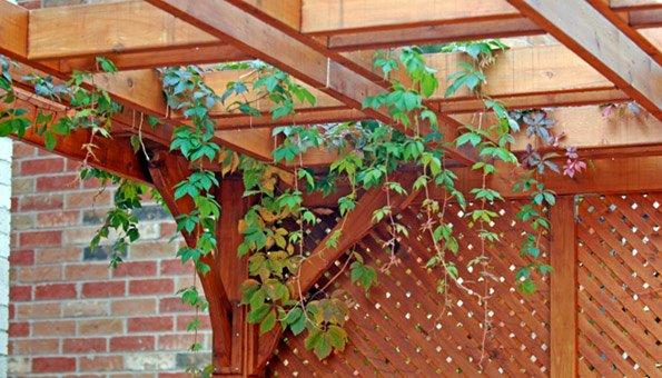 Pergola Mit Pflanzen: Wie Bauen Und Mit Welchen Pflanzen Versehen? Pergola Bepflanzen Kletterpflanzen