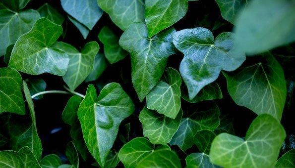 Die 11 schönsten Schattenpflanzen für Garten und Balkon