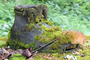 Der mit Moos überwachsene Schuh ist das Markenzeichen von Horterre