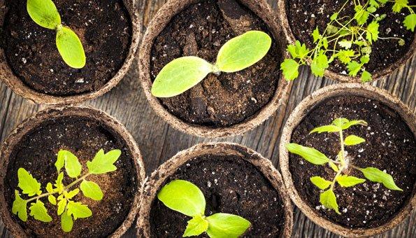Garten auf der Fensterbank: Was im Indoor Garten angebaut werden kann