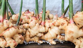 Winterprojekt für Ingwerfans: Ingwer selber pflanzen und geniessen