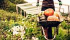 Wann und wie Sie Kürbis ernten und die Früchte richtig lagern