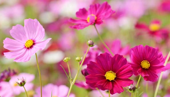 Les 12 plus belles fleurs d'été: paniers décoratifs
