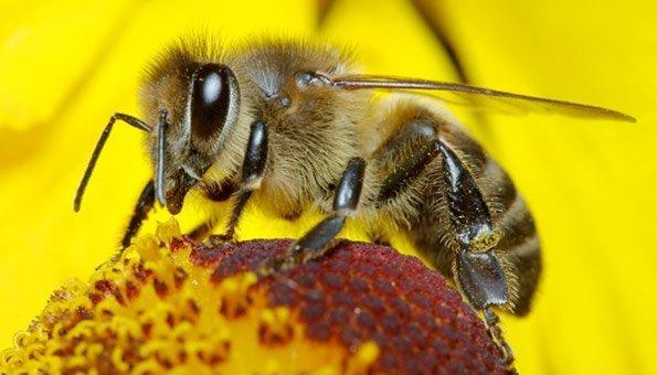 bienen in der schweiz so helfen sie wildbienen und dem bienenschutz. Black Bedroom Furniture Sets. Home Design Ideas