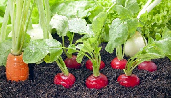 Einen Vielfältigen Biogarten Auf Dem Balkon Anlegen