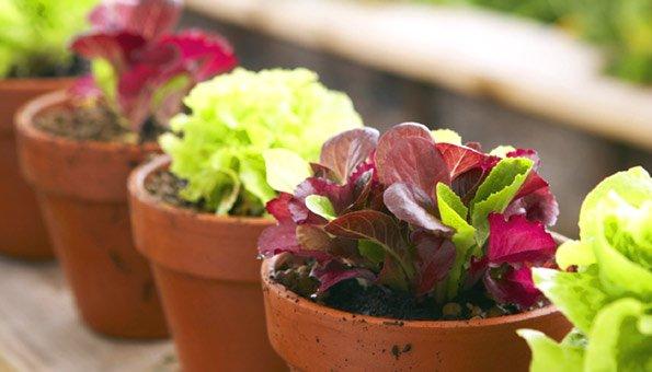 Bio-garten Auf Dem Balkon Gemuse Im Blumentopf Garten Balkon Tipps