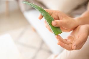 Aloe Vera pflegt gereizte Haut