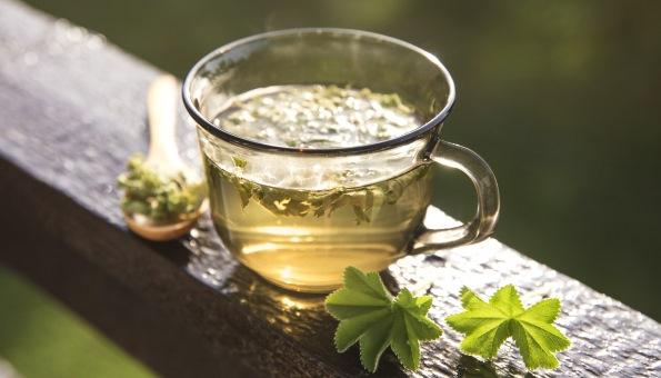 Frauenmantel: Wie der Tee wirkt & wie Sie ihn perfekt zubereiten