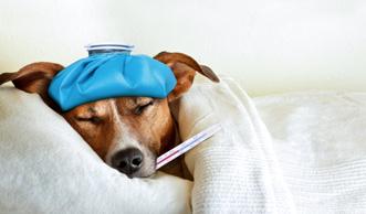 Wie sinnvoll eine Grippeimpfung wirklich ist