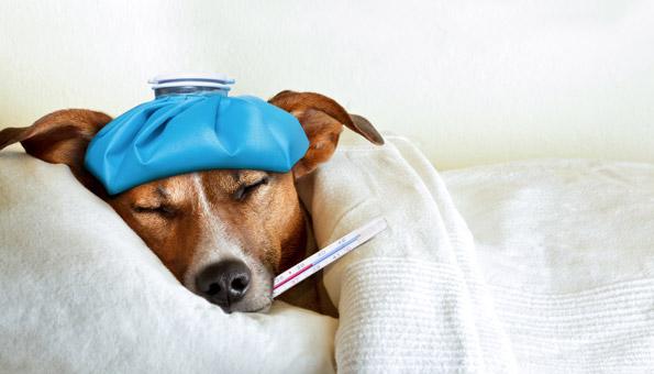 Grippeimpfung: Wie sinnvoll und welche Nebenwirkungen?