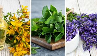Die Küche als Natur-Apotheke: Heilkräuter und ihre Wirkung