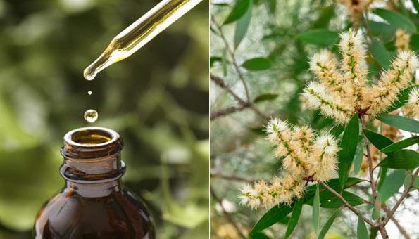 Teebaumöl – Wirkung und Tipps zur richtigen Anwendung