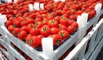 Verein Grassrooted will 30 Tonnen Bio-Tomaten vor Vernichtung retten