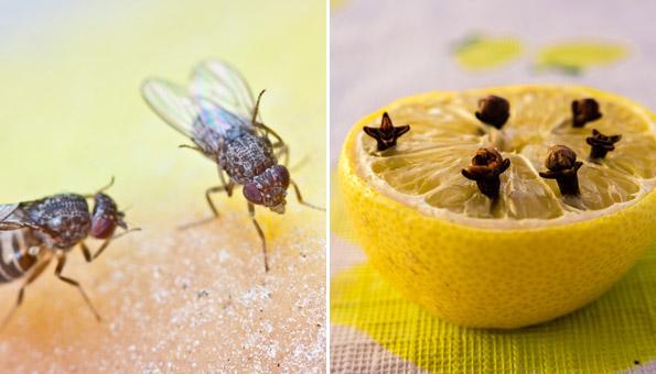 Fruchtfliegen was tun: Diese Mittel helfen gegen Fruchtfliegen