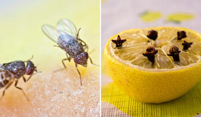 Fruchtfliegen bekämpfen: So werden Sie die lästigen Besucher wieder los