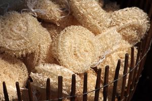 Der Luffaschwamm besteht aus dem getrockneten Fruchtfleisch des Schwammkürbis