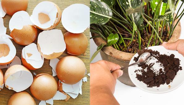 9 geniale Lifehacks für den Haushalt: Kaffeesatz und Eierschalen als Dünger
