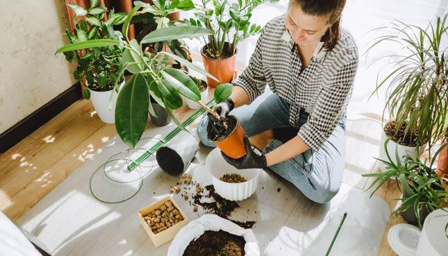 Frau topft Pflanzen um