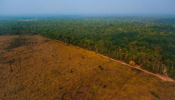 Amazonas Regenwald in Brasilien wird gerodet