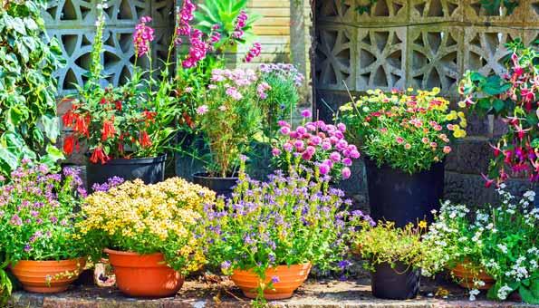 Blühende Gartenblumen in allen Farben und Formen