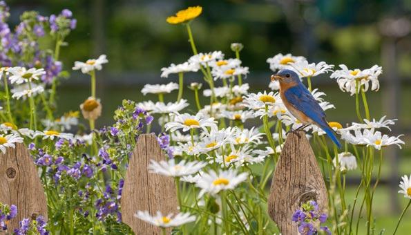 Naturgarten mit Nützlingen und verschiedenen Blumen
