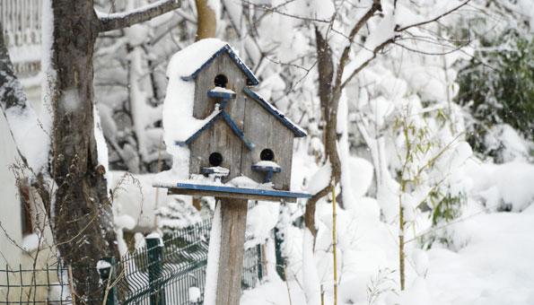 Garten und Pflanzen im Winter mit Vogelhaus.