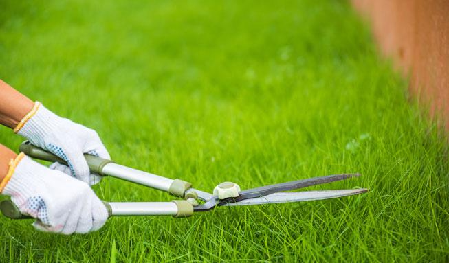 Schöner Rasen gut gepflegt nach vertikutieren und düngen